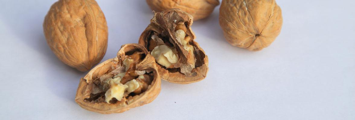 Foto walnoten: De Nootenkraker voor de Nieuwetijdse Bedrijfscultuur